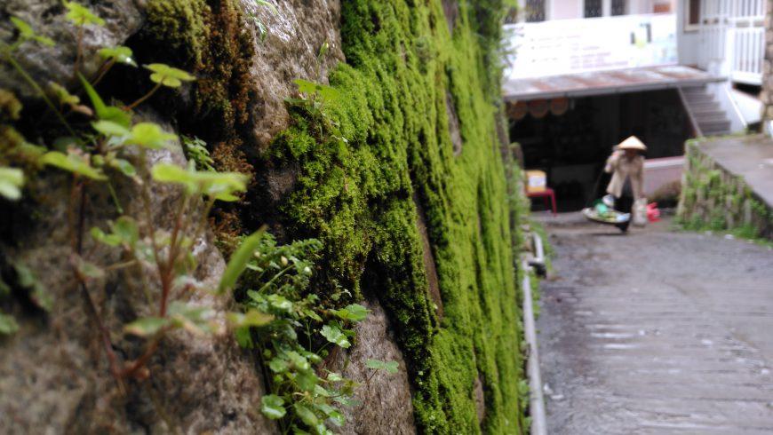 Đường dẫn của rêu