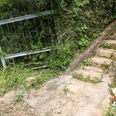 Trong căn nhà Đỗ Quyên – Thơ Phan Thanh Bình