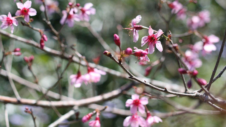 Người mang đến sắc hoa xuân